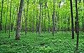 Schmidt Maple Woods.jpg