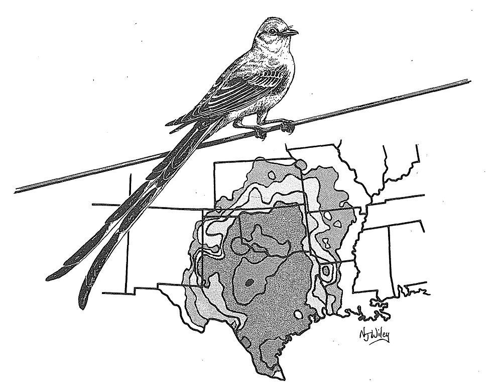 Scissor tailed flycatcher clipart - photo#6