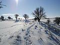 Segsbury camp - panoramio - ian freeman (1).jpg