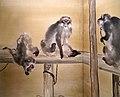 Seiho takeuchi, scimmie e conigli, 1908, 02.jpg