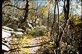 Shenandoah National Park SHEN3895.jpg