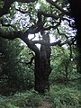 Sherwood Forest-6141147202.jpg
