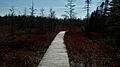 Sifton Bog - London, Ontario 02.jpg