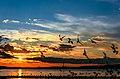 Silhouettes of seagulls on sunset flying over the Waskesiu Lake in Prince Albert National Park Saskatchewan, Canada.jpg