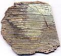 Silicified stromatolite (Strelley Pool Formation, Paleoarchean, 3.35-3.46 Ga; East Strelley Greenstone Belt, Pilbara Craton, Western Australia) (15177778617).jpg
