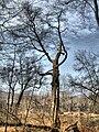 Skeleton Tree.jpg
