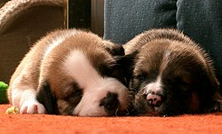 Sleeping Pups.jpg