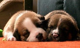 Dog breeding - Image: Sleeping Pups