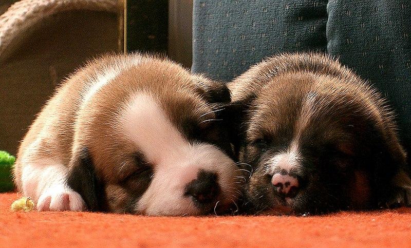 File:Sleeping Pups.jpg