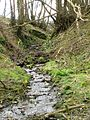 Small Stream, Cruggleton Woods - geograph.org.uk - 739430.jpg