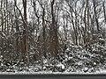 Snow, Mount Vernon District Park, post-Snurlough.jpg
