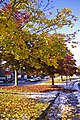 Snow in Autumn, London N14 - geograph.org.uk - 1028824.jpg