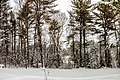 Snowy Back Yard (32508832930).jpg