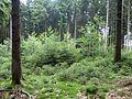 Soonwald - Lichtung - panoramio.jpg