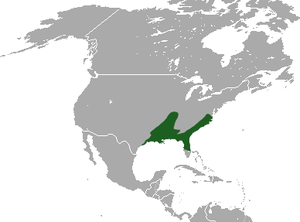 Southern Short-tailed Shrew area.png