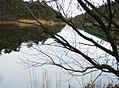 Spiegelung im See - geo.hlipp.de - 1581.jpg