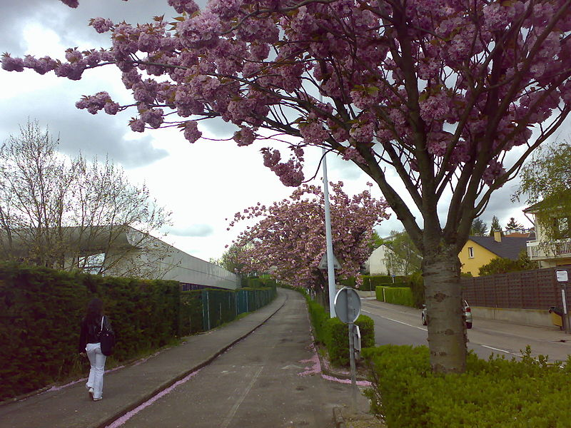 File:Spring Nancy France.jpg