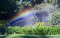 Sprinkler Supernumerary Rainbows.jpg