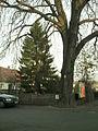 St.Pöltnertor Traismauer.JPG