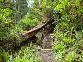 Staircase North Coast Trail.JPG