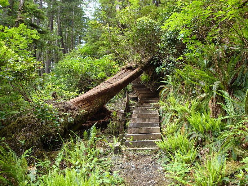 Staircase North Coast Trail.JPG
