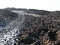 Starr-041223-2204-Senna gaudichaudii-habitat-Kanaio Beach-Maui (24427029530).jpg