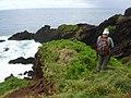 Starr-050405-5685-Solanum americanum-habitat with Ken-Alau-Maui (24742611815).jpg