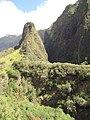 Starr-100430-4930-Syzygium cumini-habit with Iao Needle-Iao-Maui (24404410373).jpg