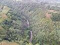 Starr-141014-2247-Caesalpinia decapetala-aerial view with stream-Kakipi Gulch Haiku-Maui (25247316505).jpg