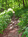 Stinging nettles alongside trail.jpg