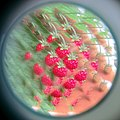 Strawberries through a kaleidoscope (9140598244).jpg