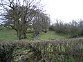 Stream and hedges at Morfydd - geograph.org.uk - 364972.jpg