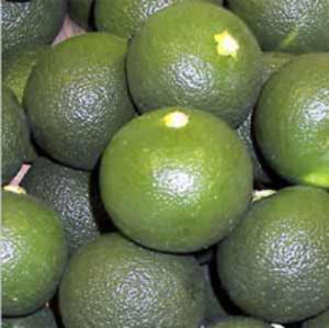 Sudachi - Sudachi fruits