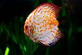 Sunfish 1.jpg