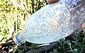 Supercooling water bottle after shaking.jpg