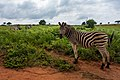 Swaziland (33621602116).jpg