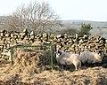 Sweet tasting hay. - geograph.org.uk - 685300.jpg