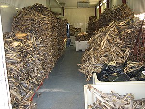 Stockfish - Stockfish warehouse in the village of Forsøl, Norway