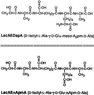 Tracheal cytotoxin - Analogs of TCT.  LacAEDapA retains the peptide chain of TCT along with toxicity despite the lack of disaccharide. LacAEαApmA loses the diamino group of TCT along with a significant level of toxicity.