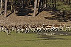 TF Wildpark Johannismuehle 03-14 img04.jpg