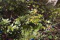 TU Delft Botanical Gardens 38.jpg
