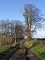 Tan Hill Way - geograph.org.uk - 282685.jpg