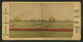 The Globe, in living plants, Washington Park, Chicago, by Chase, W. M., 1818 or 19-1905.png