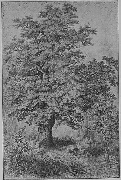 The Oak (Marshall Ward) Plate I.jpg