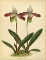 The Orchid Album-02-0144-0095.png