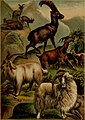 The animal kingdom; based upon the writings of the eminent naturalists, Audubon, Wallace, Brehm, Wood and others (1897) (18010788739).jpg