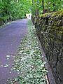 The fallen leaves of ... spring? (2539854868).jpg