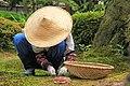 The gardener - Kenroku-en, 兼六園, Kanazawa, Ishikawa, Japan, gardener (42181793695).jpg