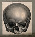 The skull of the painter Raphael; frontal view. Lithograph. Wellcome V0009508EB.jpg