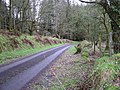 The woods at Killydart - geograph.org.uk - 137655.jpg